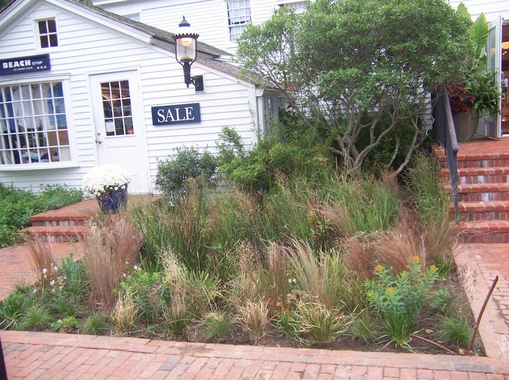 Native plants and permeable landscapes in Amagansett Square